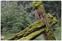 Nature Re-claiming Haida Longhouse Foundation