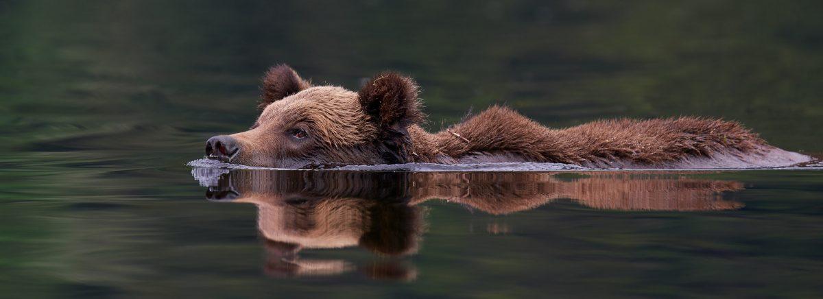 grizSwim